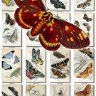 BUTTERFLIES-42 62 vintage print