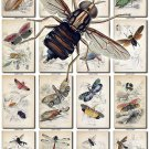 INSECTS-34 41 vintage print