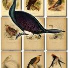 BIRDS-18 204 vintage print