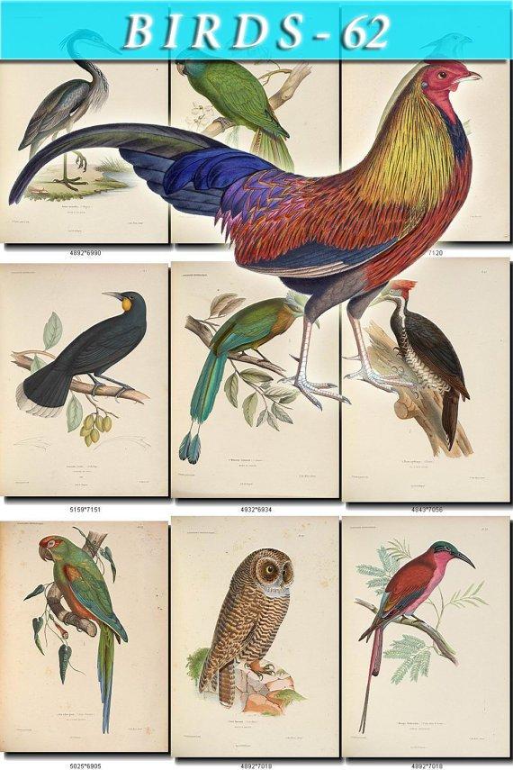 BIRDS-62 73 vintage print