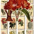 FLOWERS-8 262 vintage print