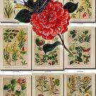 FLOWERS-18 101 vintage print