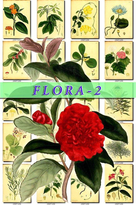 FLORA-2 264 vintage print