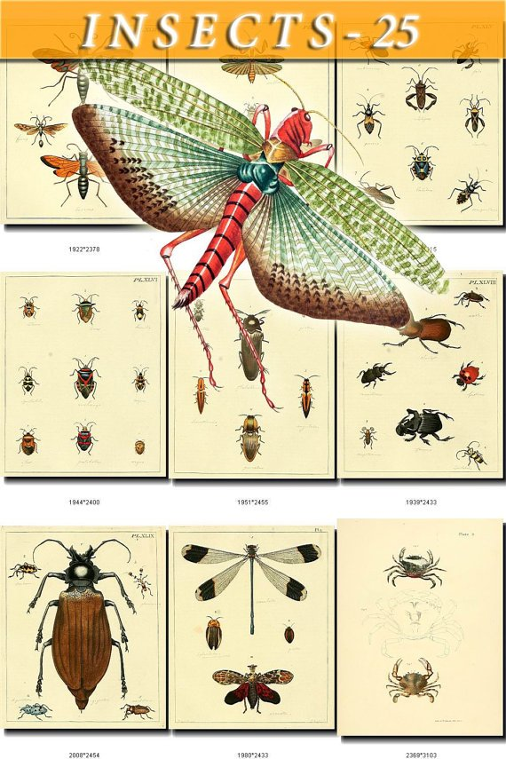 INSECTS-25 98 vintage print