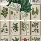 LEAVES GRASS-84 271 vintage print