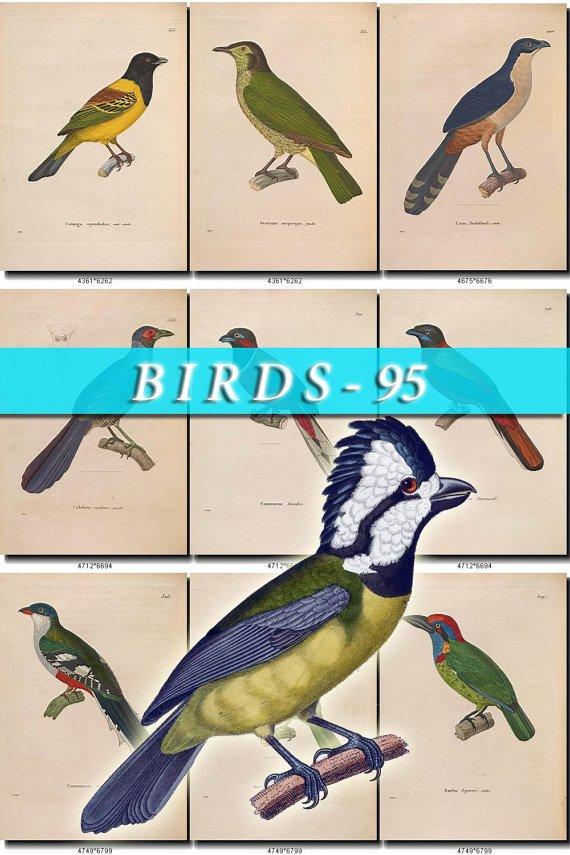 BIRDS-95 138 vintage print