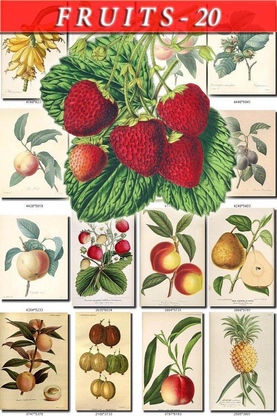 FRUITS VEGETABLES-20 145 vintage print