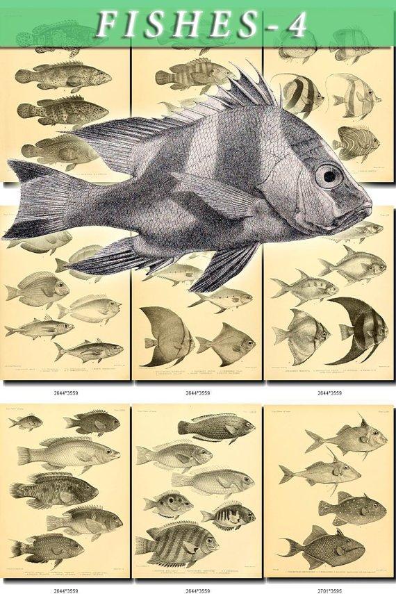 FISHES-4-bw 201 black-, -white vintage print
