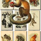 PRIMATES APES BEST-1 images 72 most beautiful vintage print