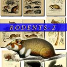 RODENTS-2 52 vintage print