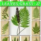 LEAVES GRASS-27 202 vintage print