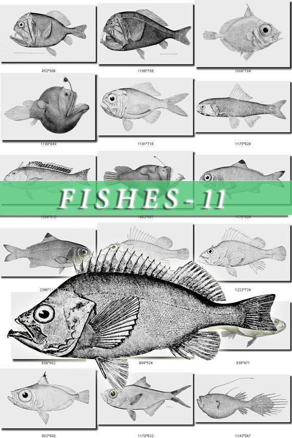 FISHES-11-bw 430 black-, -white vintage print