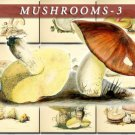 MUSHROOMS-3 50 vintage print
