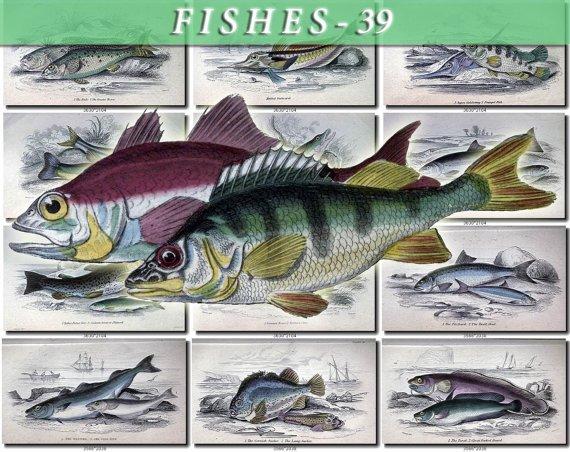FISHES-39 68 vintage print