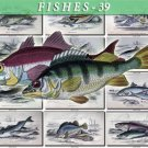 FISHES-39 68 vintage print