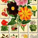 FLOWERS-54 81 vintage print