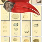 BIRDS EGGS-4 166 nests heads vintage print