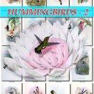 HUMMINGBIRDS-2 TROCHILIDAE 218 vintage print