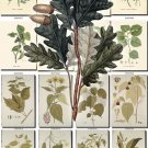 LEAVES GRASS-78 290 vintage print