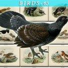 BIRDS-63 88 vintage print