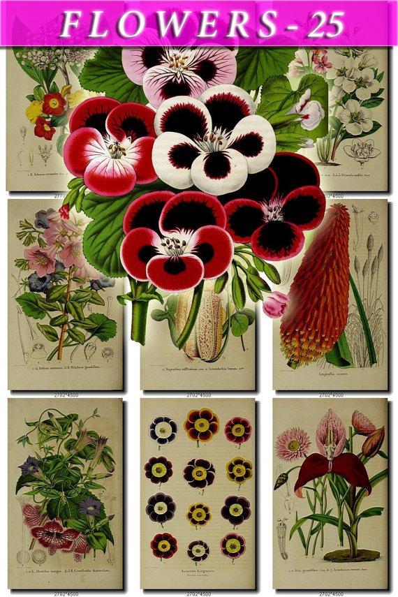 FLOWERS-25 86 vintage print