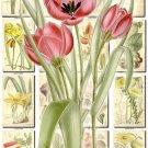 FLOWERS-84 240 vintage print
