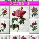 ROSES-3 165 beautiful vintage print