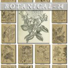 BOTANICAL-14-bw 208 black-, -white vintage print