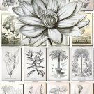 BOTANICAL-26-bw 482 black-, -white vintage print