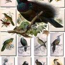 BIRDS-133 54 Mantou Firebird Fan Shaker Dove Wild Mard Pochard vintage print