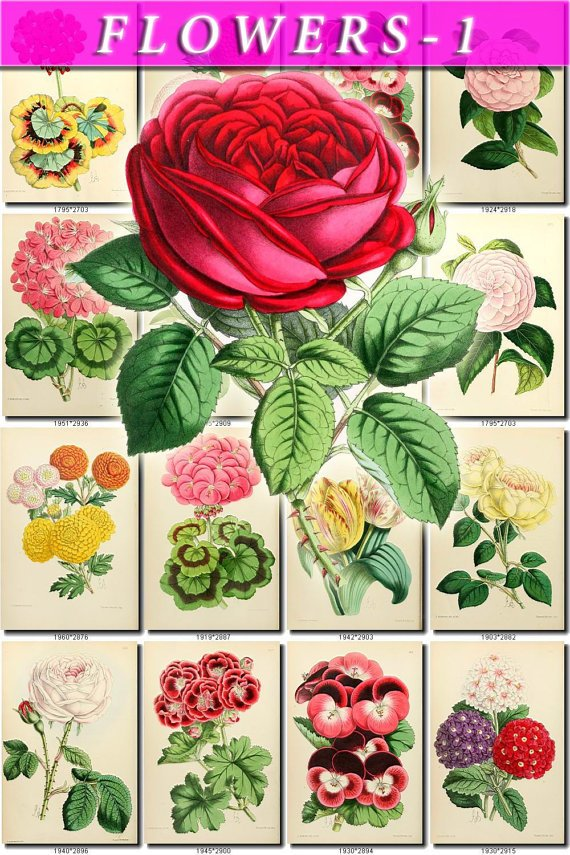 FLOWERS-1 228 vintage print