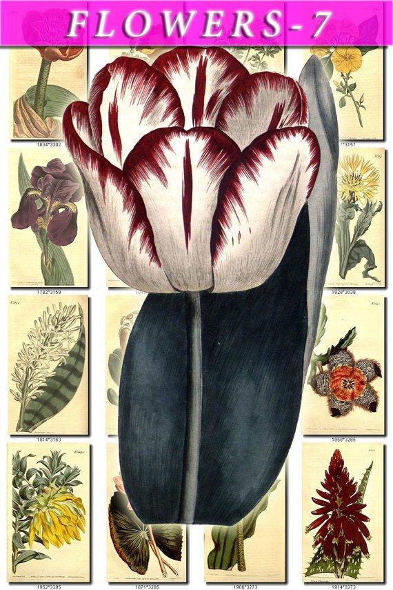 FLOWERS-7 268 vintage print