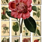 FLOWERS-12 251 vintage print