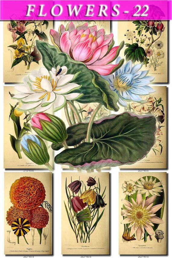 FLOWERS-22 76 vintage print