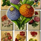 FLOWERS-33 56 vintage print