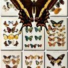 BUTTERFLIES-15 64 vintage print