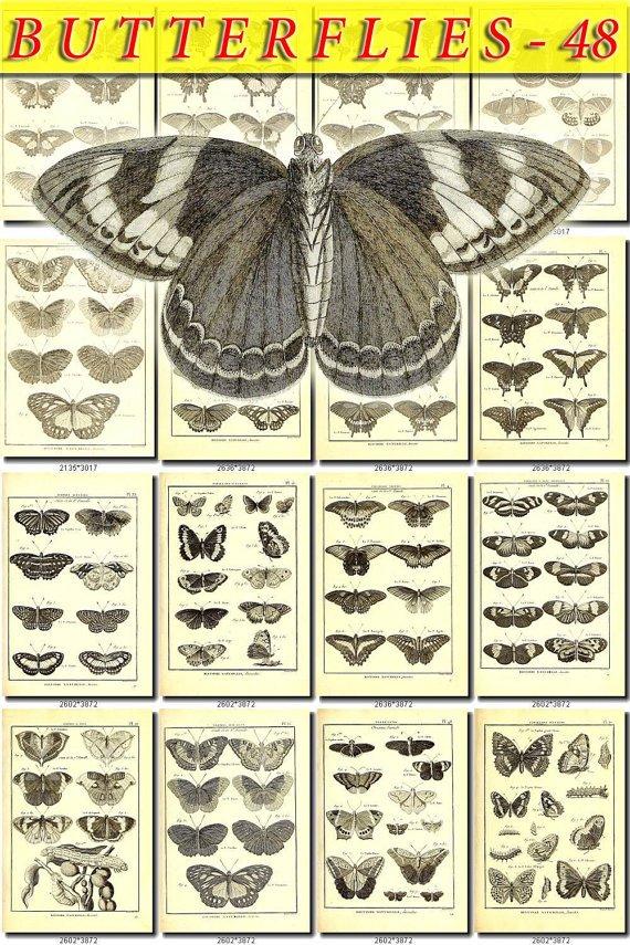BUTTERFLIES-48-bw 186 black-, -white vintage print