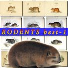 RODENTS BEST-1 images 57 most beautiful vintage print