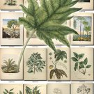 LEAVES GRASS-82 323 vintage print