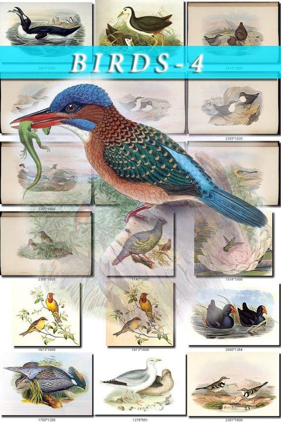 BIRDS-4 800 vintage print