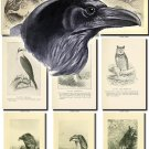 BIRDS-11-bw 219 black-, -white vintage print