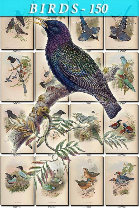 BIRDS-150 210 vintage print