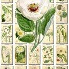 WHITE-2 FLOWERS 250 vintage print