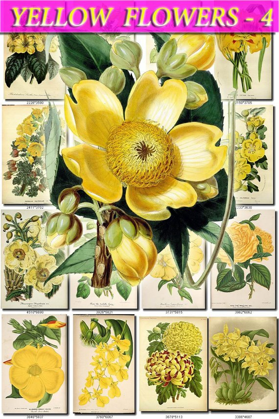 YELLOW-4 FLOWERS 270 vintage print