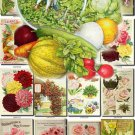 SEEDS-3 Catalogs Covers Collection with 70 vintage print