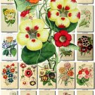 MULTI-COLORED-1 BOUQUETS flowers 180 vintage print