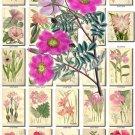 PINK-2 FLOWERS 200 vintage print