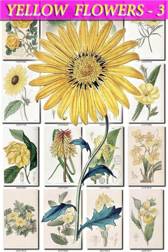 YELLOW-3 FLOWERS 220 vintage print