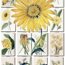 YELLOW-3 FLOWERS 220 vintage print