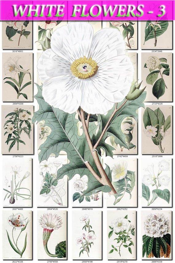 WHITE-3 FLOWERS 220 vintage print